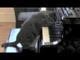Кошка играет на пианино в сопровождении оркестра
