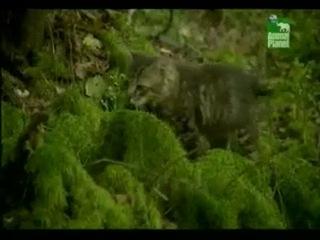 Животные в Чернобыле. Часть 4_-lovi.tv