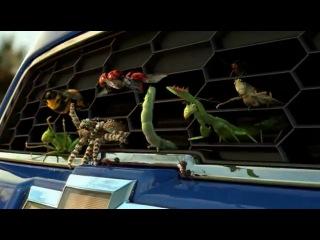 Chevrolet Aveo 2012 и насекомые