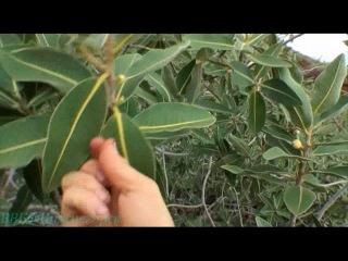 Discovery Выжить любой ценой 13 Кимберли Западная Австралия Документальный 2007