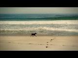 KAFFEIN feat Al Jet - All That She Wants (DJ Nejtrino &amp DJ Stranger Remix) HD Video (promodj.com)