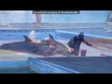 Море 2013!!! под музыку DJ Slon и Ангел А - Все дельфины в ураган уплывают в океан. Picrolla