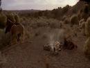 Undead Or Alive: A Zombedy (Зомби на Диком Западе) полуживой или мертвый (2007) комедия ужасов
