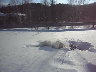 купание Бобра зимой