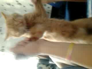 эй толстый) исполнитель за кота  катя романова