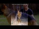 «Пайк» под музыку Лучшие Саундтреки Голливуда (C - Король Лев (1995) Can You Fell. Picrolla