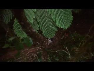 Волшебники из Вэйверли Плэйс 4 сезон 30 серия