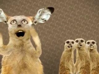 Numa Cat мешная пародия на песню группы O Zone Dragostea din tei