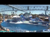 Шоу с участием акробатов и дельфинов в парке «Sea World» (Сан-Диего, США, 2011)