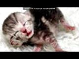 «бедняжки» под музыку Кристина Прилепина - Котёнок в колодце. Picrolla