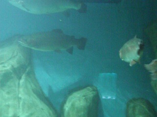 Московский океанариум РИО. Пресноводные рыбы 05,06,2013