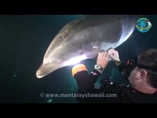 Bottlenose Dolphin Rescue