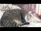 КОТ БАСЬКА под музыку заяц поп шоу - я завёл себе кота. Picrolla
