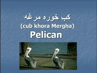 ▶ Pashto- Animals Part 3