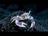 Подводный учебник по пикселям / The Underwater Pixelguide (2012)
