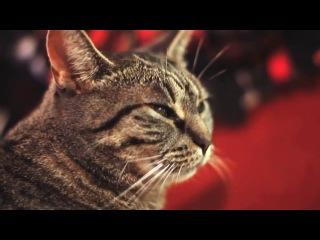Кошка поет рок