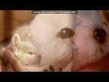 «милые мои котята» под музыку Анна Седакова - Ну привет,Я твоя кошка..Поиграй со мной немножко..Ты же видишь как хочу..мурчу..И смелым быть со мною можно, только очень осторожно..Просто будь со мною нежным..как прежде...Kiss, kiss, kiss,kiss..Тсс..... Picrolla