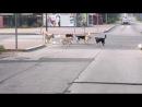 Бездомные собаки в Югорске. Рядом детский парк и парк у фонтана. Почему их столько много?
