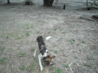 Потеряшка Джек и бывшая потеряшка Лита на прогулке.