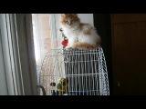 Кот Персик и попугай Кики - друзья