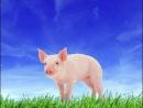 Как говорят животные звуки животных для самых маленьких