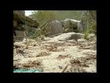 BBC «Жизнь животных: Плотоядные - Змеи» (Документальный, 2002)
