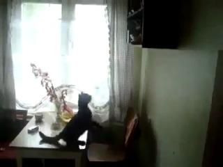 Неопределившийся котейка