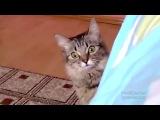 Кот, котик, страх, ужас, прикол, паника, испуг, пугалка, прыжок :)