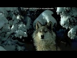 волки под музыку F.Z.K.N.E.P. - САМАЯ КРУТАЯ ПЕСНЯ В МИРЕ. Picrolla
