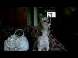 Белла поёт под игрушку)))