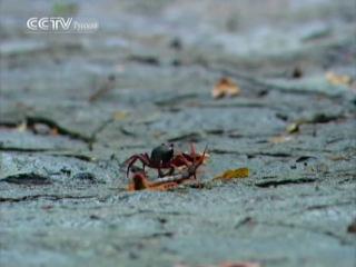 Природа Китая. Часть 7: Влажный тропический лес (термиты, желтые муравьи, большая хайнаньская белка)