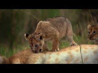 Мир полон чудес: Красота Дикой Природы