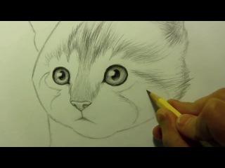 Як намалювати кицьку, кота, кошення .