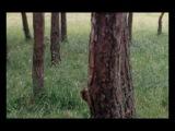 Фрагмент из фильма Андрея Тарковского «Жертвоприношение» 1986 год.