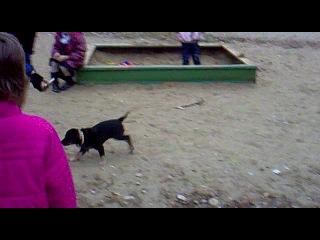 Энжи играет с собаками)