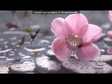 «Цветы» под музыку Русская народная песня - Синий платочек. Picrolla