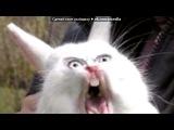 кошки под музыку Неизвестен - Dj Ivan Frost - па-па-ра-пам-пам,пара-пара-пам-пам. Picrolla