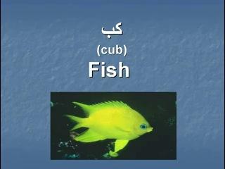 ▶ Pashto- Animals Part 2 -