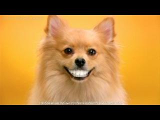 Лакомство по уходу за зубами Pedigree Denta Stix
