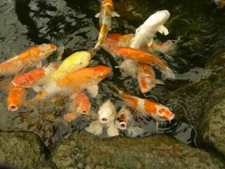 Кормление рыбок из соски в океанариуме в Паттайе