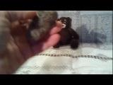 Мишки из шерсти