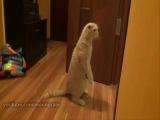 Кот, коты, котик, смешно, прикол, ржака, страх, испугался, любопытство, два кота, смех, до слез :)