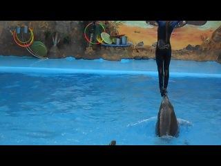 В Одесском дельфинарии