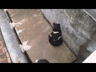 мишка-шалунишка-драчунишка