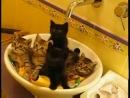 Самые синхронные котята