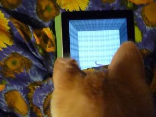 Гоша, как уважающий себя молодой кот, идет в ногу с прогрессом.