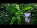 «Кипр. Пафос.2012» под музыку Доминик Джокер - Рим-Париж. Picrolla