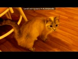 мои котэ под музыку чисто ахуенный клубняк - мега бас и мега тыц тыц. Picrolla