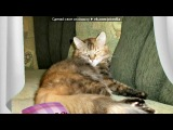 котики мои под музыку Смешная Песенка - Про кота. Picrolla