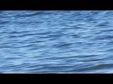 Азовское море Урзуф 2012
